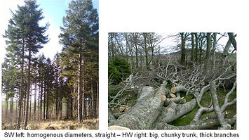 Linnorie Firewood Services (LFS) - Aberdeenshire & Moray firewood logs supplier: Trees hardwood and softwood
