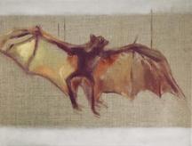 Bat low res.jpg