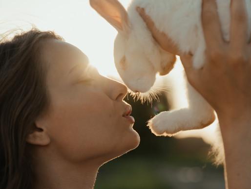 Genre-Hopping: Dem Plot-Kaninchen hinterher!