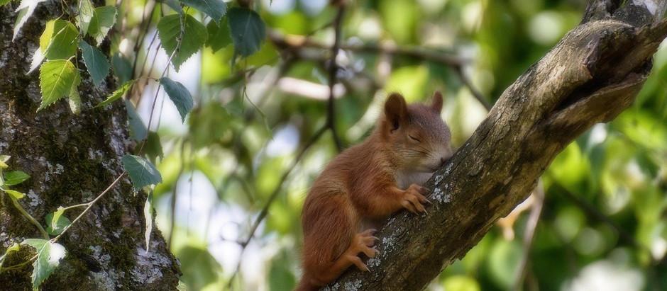 3/21 | Mühsam ernährt sich das Eichhörnchen