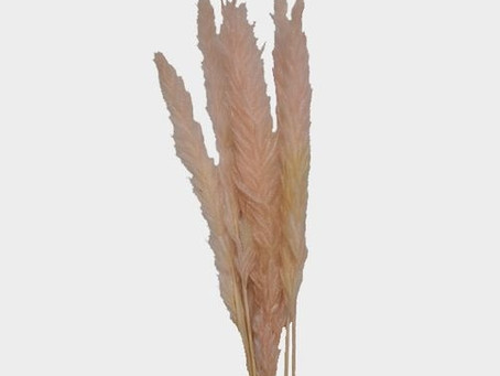 Pampas Grass - Wedding Floral Supplies