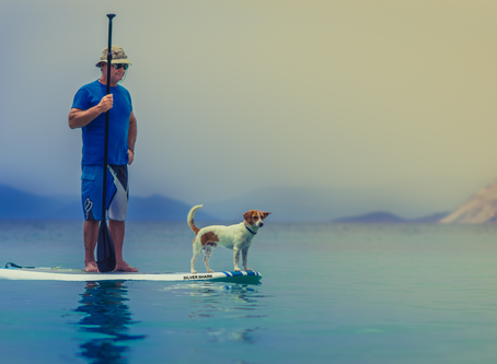 What to look for when you buy a sup board