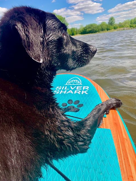 Mat Pad For your dog on paddle board Sea