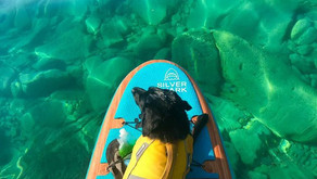 Introducing your dog to paddle boarding (easy steps)