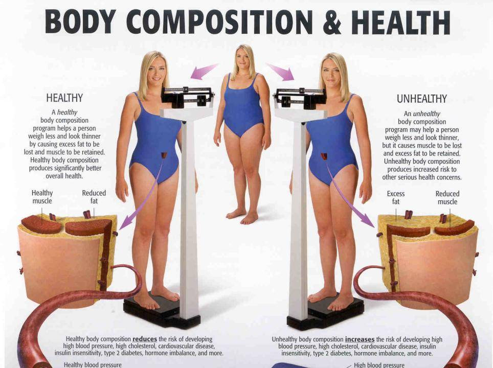 Body Composition Assessment at FO Fitness