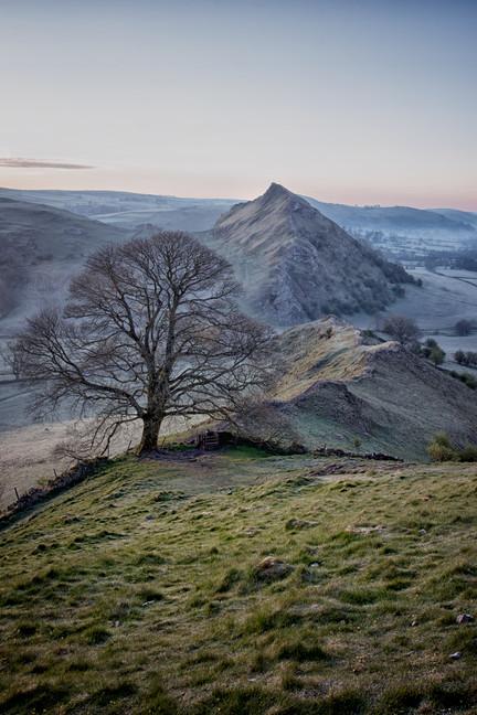 Chrome Hill Tree.jpg
