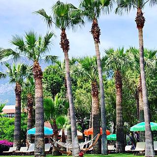 renkli plaj şemsiyeleri, renkli güneş şemsiyeleri, uçuşan havuz şemsiyeleri, lara concept şemsiye, tasarım güneş şemsiyeleri, rafya şemsiye, 2m şemsiye, 3m şemsiye, yuvarlak güneş şemsiyesi, kare güneş şemsiyesi