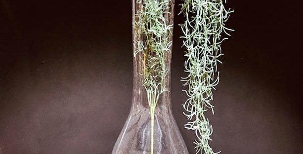 Clear Glass Boa Bottle