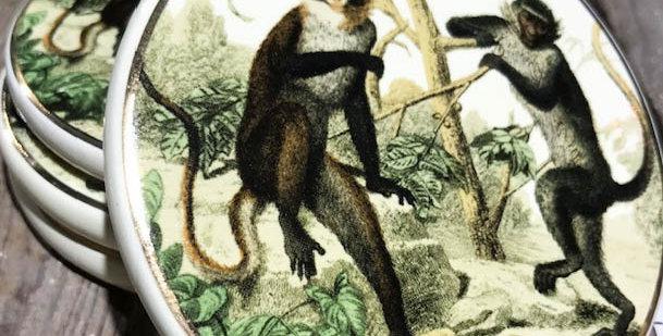 Monkey Coasters