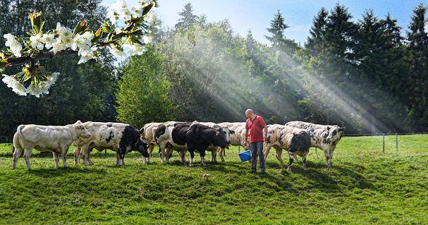 La boucherie thierry fabienne à Frasnes-lez-Gosselies garantit la qualité de l'élevage Blanc Bleu Belge de la ferme familiale