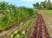 Freme de la Chapelette, ferme maraîchère en culture raisonnée, belgique