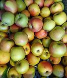Ferme de la Chapelette, pommes de saison, belgique