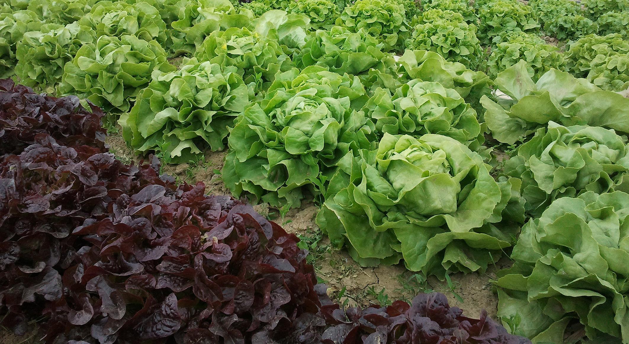 Légumes de saison Ferme Chapelette
