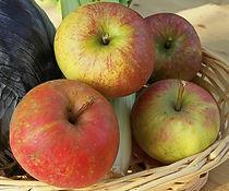 Ferme de la Chapelette, fruits et légumes de saison, belgique