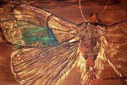 Laure Van De Meele Papillon de nuit