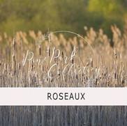 ROSEAUX.jpg