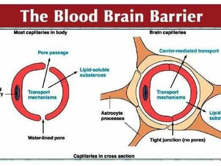THE BLOOD-BRAIN BARRIER