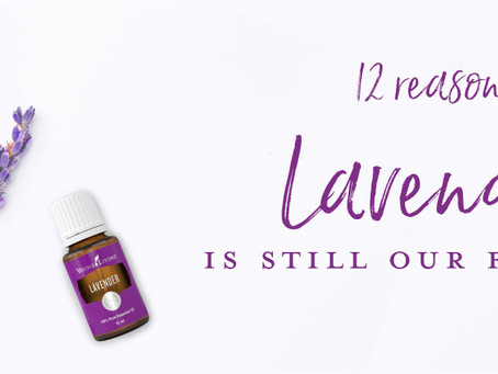 12 REASONS LAVENDER IS STILL OUR FAVORITE!