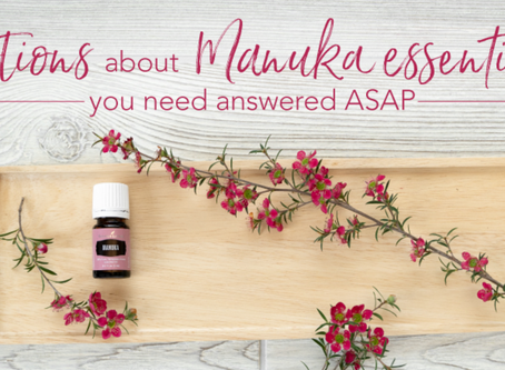 4 QUESTIONS ABOUT MANUKA ESSENTIAL OIL: ANSWERED!