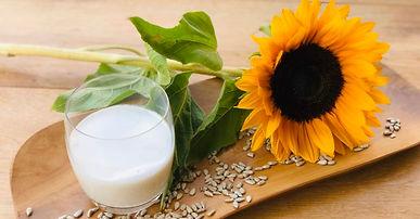 Milch aus Sonnenblumenkernen. Das geht wirklich!