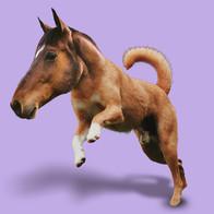 HorseDog.jpg