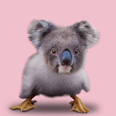 KoalaChick.jpg