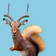 AntelopeSquirrel.jpg