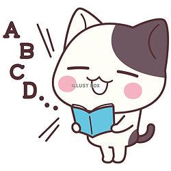 英語猫.jpg