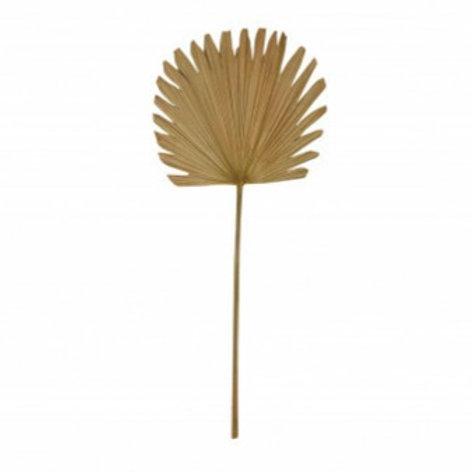 Palmenblatt gezackt