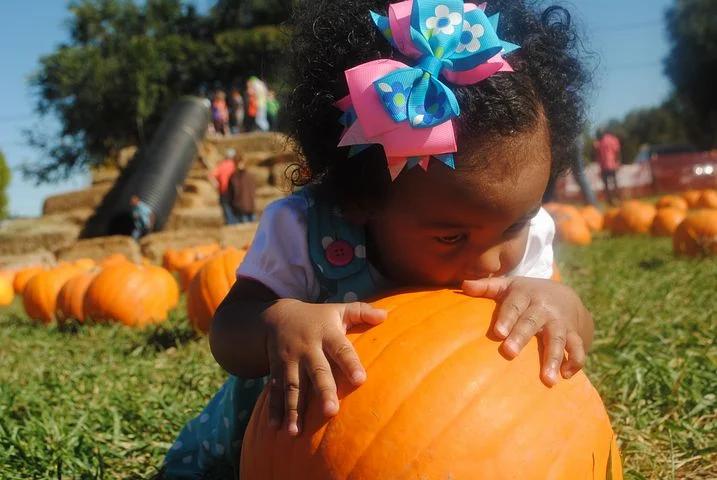 pumpkin-patch-1950340__480.webp