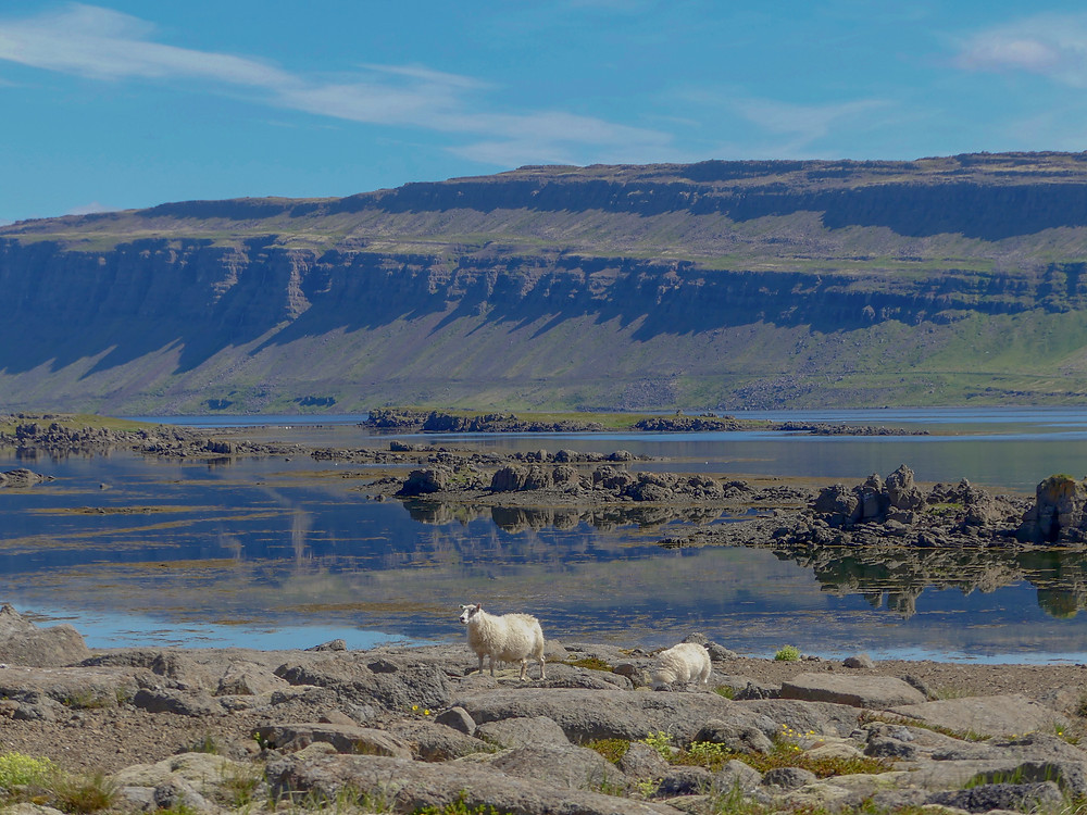 Diary of taking an Icelandic Crash Course at the University Centre of the Westfjords in Ísafjörður in Iceland.
