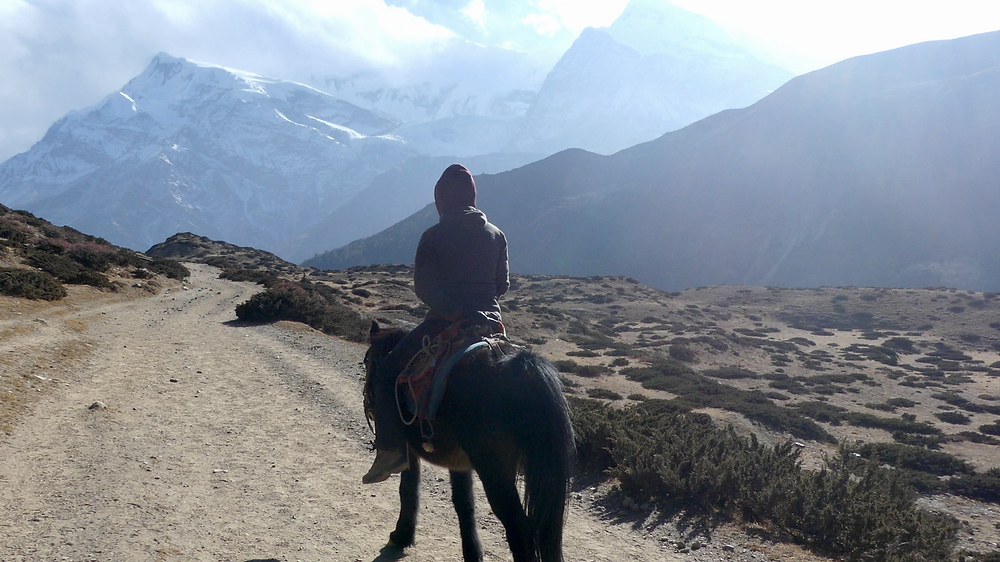 From Thorong Phedi Base Camp to Pokhara in 36 hours What to do when you have to return from the Annapurna Circuit Trail because of altitude sickness.
