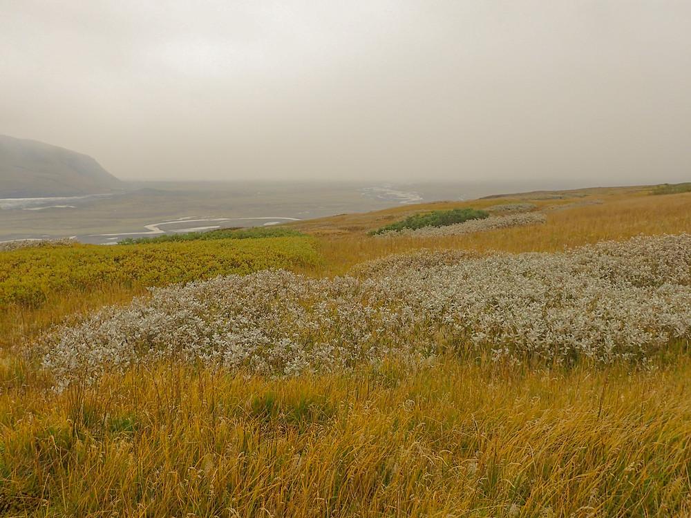 Hiking between Morsárjökull and Skaftafellsjökull in Vatnajökull National Park, Iceland.