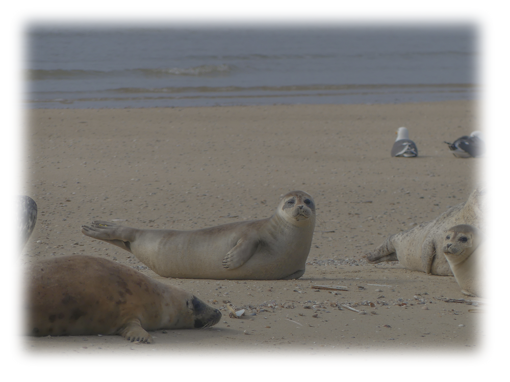 Seals' tales, a story inspired by a seal watching trip in Terschelling in the Netherlands.
