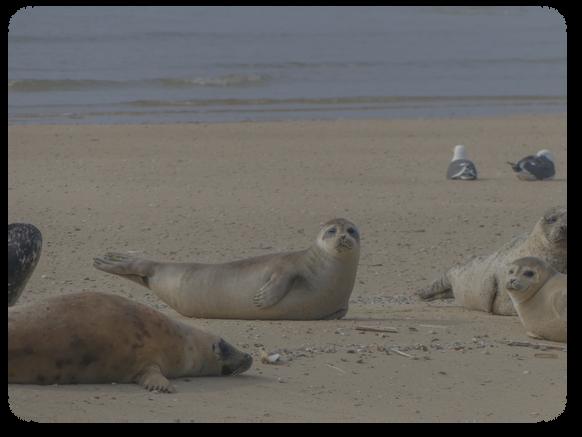 Seals' tales