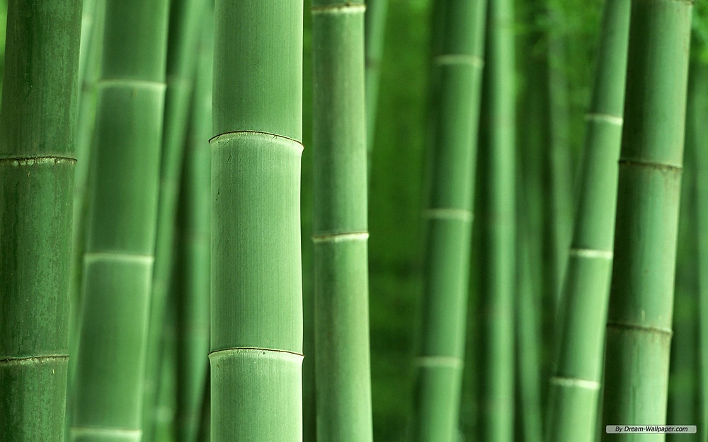 Bamboo is the fastest growing plant