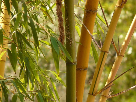 The Incredible Benefits of Bamboos