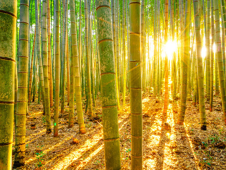 Bamboos - The Material Of The Future