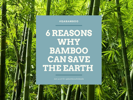 6 Reasons Why Bamboo Can Save The Earth