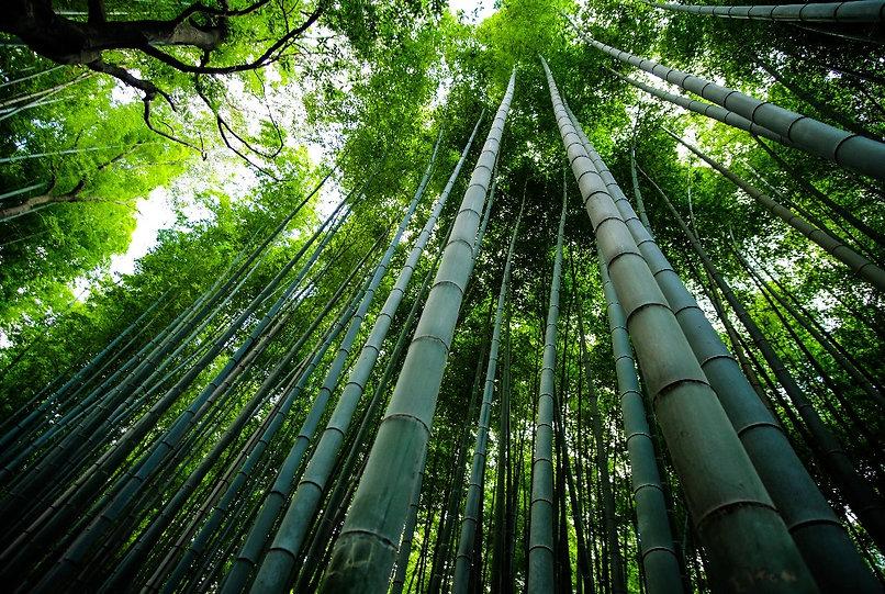 Bamboo%20Forest%20in%20Arashiyama%20(Kyo