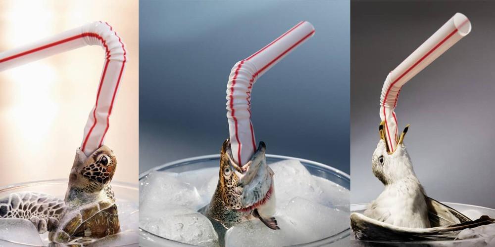 Plastic straws are killing sea creatures