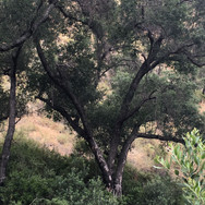 Whiting Ranch Heart Branch