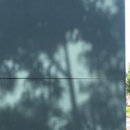 Shadow Tree Heart