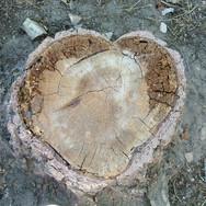 Green Valley Heart Stump