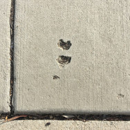 Sidewalk Hearts