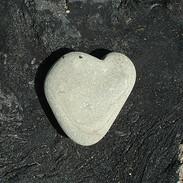 Carpenteria Heart 2