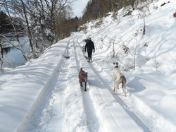 Snow covered walkway by Felin Uchaf