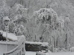 Winter frozen trees at Felin Uchaf