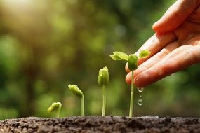 Letting go(grow) of good employees