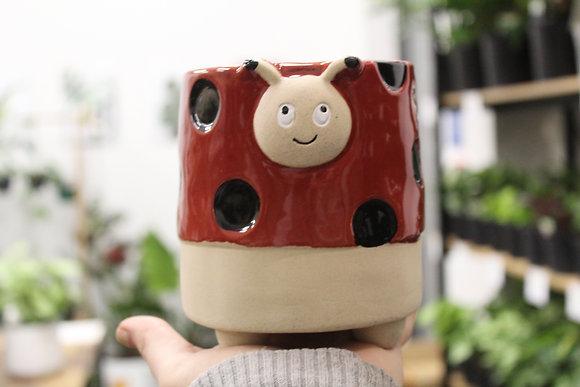 Lily Ladybird Pot